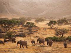 South Africa Elephants by <b>Asif Akrami</b> ( a Panoramio image )