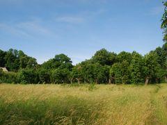 парк, Підгорецький замок by <b>Юрій Pепало</b> ( a Panoramio image )