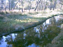 026 Midis Pyllit dhe Lagunes (Jug) by <b>Ermal Mino</b> ( a Panoramio image )