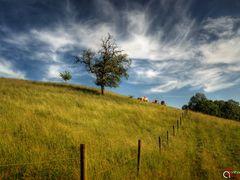 Oberer Haldenweg Lenzburg by <b>Anthony August</b> ( a Panoramio image )