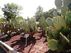 Mexico, D.F., Delegacion Miguel Hidalgo, Nopalli. by <b>Pecg17</b> ( a Panoramio image )