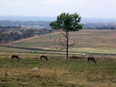 Rezerwat Natury  - Pretoria, RPA by <b>mar-al</b> ( a Panoramio image )