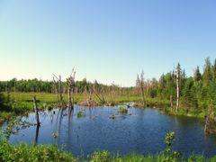 beaver pond at 10.5K  by <b>aks 1</b> ( a Panoramio image )