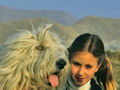 Green Eyes Dog and Francis by <b>gilberto silvestri</b> ( a Panoramio image )