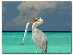 "the prey by <b>Giorgio D""Arrigo</b> ( a Panoramio image )"