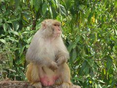 NEPAL KATHMANDU-MONKEY ENJOYING SURROUNDING by <b>Sanjaya poudyal *sp*</b> ( a Panoramio image )