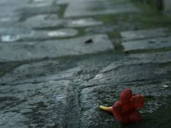 Flower felt down to the ground. by <b>dardani.m</b> ( a Panoramio image )