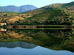 Reflections on the Douro to my friend Anna (sr-anna) in Bekescsa by <b>Mario Eloi Castro</b> ( a Panoramio image )