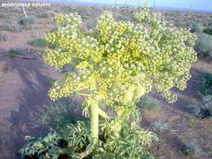 флора by <b>maks141</b> ( a Panoramio image )