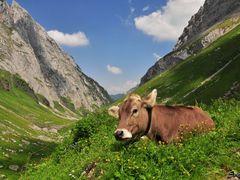 Enjoy the mountains! © Sunpixx by <b>Sunpixx</b> ( a Panoramio image )
