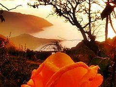 a rose alone in the mountains by <b>? ? Osho Angel ? ?</b> ( a Panoramio image )
