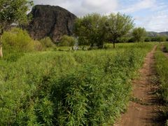 camp by cannabis field by <b>Alex Ang</b> ( a Panoramio image )