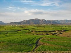 Scenic View of the Wheat Fields at Barotha by <b>Mansoor Goheer</b> ( a Panoramio image )