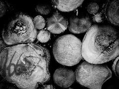 Trees by <b>PanDan</b> ( a Panoramio image )