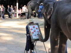 ?Great Artist ~Maesa Elephant Camp~? by <b>?AXL?BACH?</b> ( a Panoramio image )