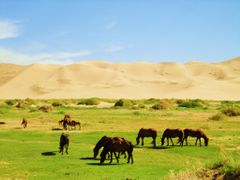 Khongoryn Els horses by <b>Optymistique</b> ( a Panoramio image )