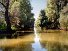 Danube Delta Jungle by <b>Ovidiu Anca</b> ( a Panoramio image )