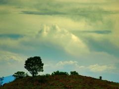 Tree on a hill by <b>j. adamson</b> ( a Panoramio image )