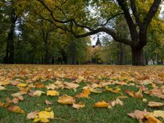 Yellow leaves by <b>Petri Sirkkala</b> ( a Panoramio image )