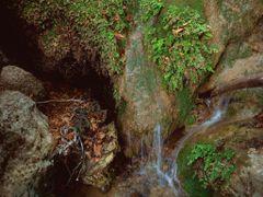"""Lepkefa""- Rodosz - Pillangok volgye - Valley of Butterflies 2./ by <b>katlin</b> ( a Panoramio image )"