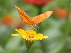 Mariposa en Flor by <b>yurisantacruz</b> ( a Panoramio image )