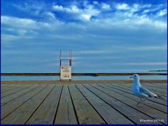 Old Gull and the Sea (with apology to Ernesto H.)  by <b>Tomros</b> ( a Panoramio image )