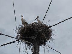 Storks in Harprich by <b>Hans de Jong</b> ( a Panoramio image )