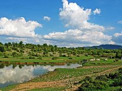 Cattle Drinking Water at Pond by <b>Mansoor Goheer</b> ( a Panoramio image )