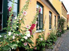 *Summer -  Drag?r Old Town*  by <b>ka9894</b> ( a Panoramio image )