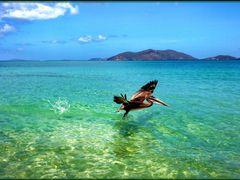 il mare delle isole Vergini Britanniche by <b>patano</b> ( a Panoramio image )