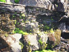 Abshir, spring by <b>igor_alay</b> ( a Panoramio image )