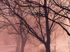 early morning mist by <b>George Sled</b> ( a Panoramio image )