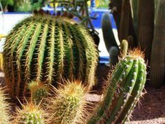 Jardin Majorelle - Marrakech by <b>RicardoFilho</b> ( a Panoramio image )