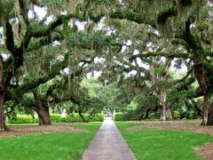 Live Oak Trail by <b>livingworld</b> ( a Panoramio image )