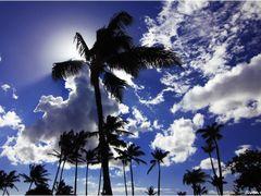 Palmtree by <b>Sven Goelles</b> ( a Panoramio image )