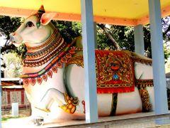 Decorated Nandi, Jharkhand Mahadev Mandir, Jaipur, Rajasthan by <b>Dr.V.S.Chouhan</b> ( a Panoramio image )