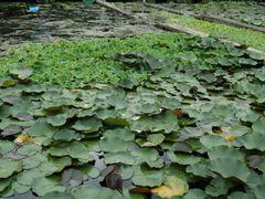 Seonyu Island ??? ??? by <b>plumgarden</b> ( a Panoramio image )