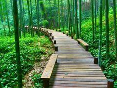 The Bamboo World park - Парк Бамбуковый мир by <b>OpenBox</b> ( a Panoramio image )