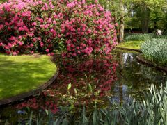 Reflection to the pond by <b>francinelb3</b> ( a Panoramio image )