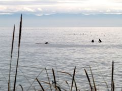 Surfers at Jordan River by <b>Paul Andrew Biffin</b> ( a Panoramio image )
