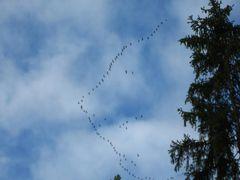 migratory birds by <b>joker.joker</b> ( a Panoramio image )