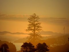 Foggy morning in National Treaty grounds at Bay of Islands, New  by <b>4ullas</b> ( a Panoramio image )