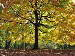 Autumn in Trout Park Nature Preserve (Elgin) by <b>Antoine Jasser</b> ( a Panoramio image )