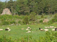 Bomarsund Pasture by <b>PlamenB</b> ( a Panoramio image )