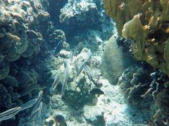?Aguas cristalinas en el arrecife! Aruba. by <b>©Chaydee</b> ( a Panoramio image )