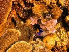 Reef, en Fesdu. by <b>Madame X</b> ( a Panoramio image )