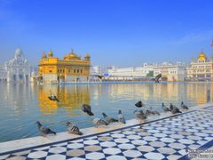 BIRDS AT GOLDEN TEMPLE by <b>Sonu Dhadwal</b> ( a Panoramio image )