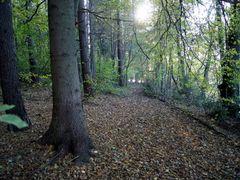 Jesienna aleja. by <b>Malgorzata SK</b> ( a Panoramio image )