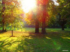 jesenne popoludnie v parku by <b>nokristina</b> ( a Panoramio image )