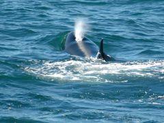 suspiro de Orca by <b>jorgecaze</b> ( a Panoramio image )